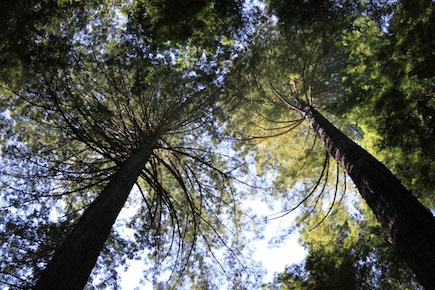 Is private forestland at risk as owners age?