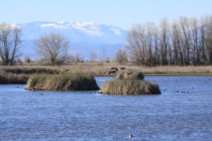 Recreated wetlands in the Central Valley, California