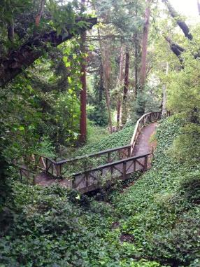 Ivy Choked Paths at Hinkel Park