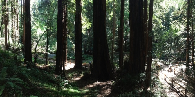 Has Muir Woods become Disney Land?