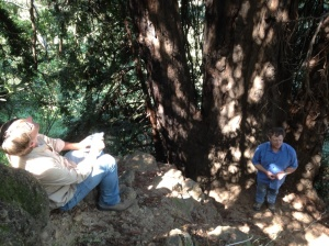 Peter Fimrite and Todd Keeler-Wolfe at the base of the tree (E.Burns)