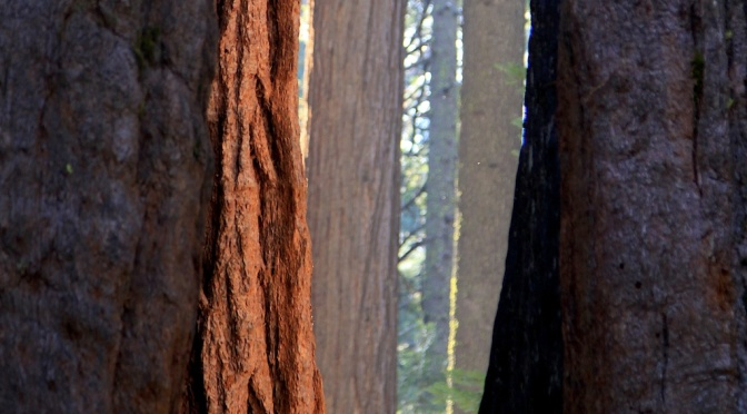Places I love: Calaveras Big Trees State Park