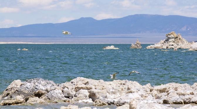 Restoring Mono Lake