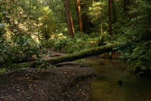 Little Butano Creek, Butano Redwoods SP
