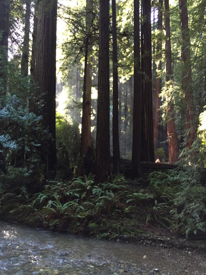 Three ways to beat the crowds at Muir Woods