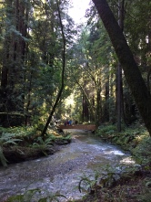 Redwood Creek, Muir Woods National Monument