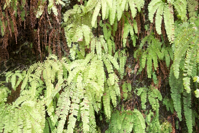Places I love: Fern Canyon, Prairie Creek Redwoods State Park